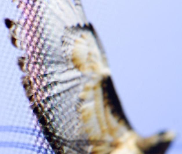 wing_retina_large